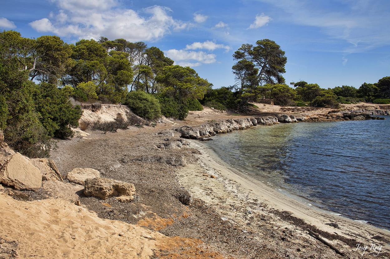 Natur am Strand von tugores in colonia de sant jordi